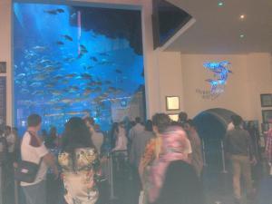 Dubai Aquarium.